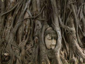 Testa di Buddha, Wat Mahathat