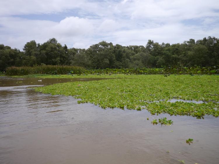 Cosa vedere a Chau Doc, Tra Su Forest