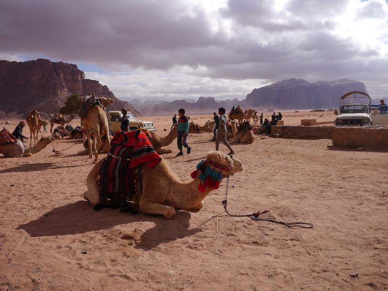 deserto del wadi rum, giordania, Friariella